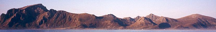 Skogsøya